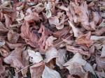 Verdorde bladeren op de grond