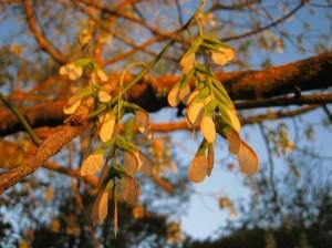 De bomen zijn al bladloos vanwege de hitte