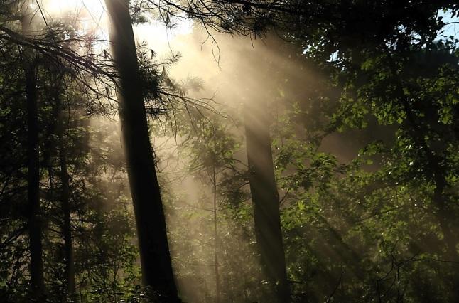 Stralen van hoop (cc: clovermountain op Flickr)